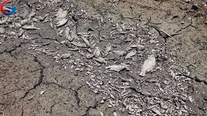 Cánh đồng chết